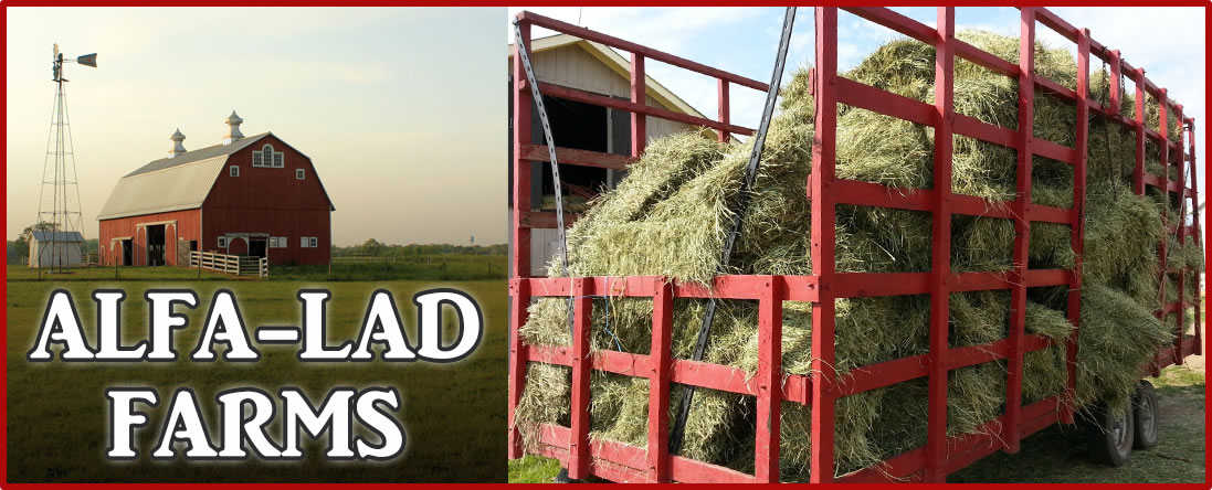 Hay from Alfa-Lad Farms